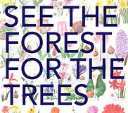 forest for the trees 1