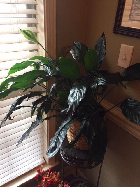 Mom's plant